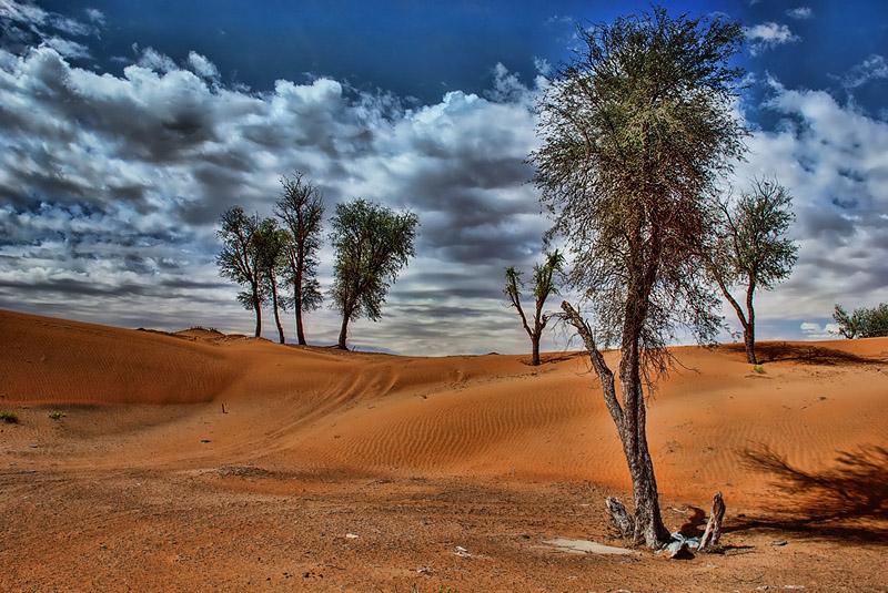 desert881